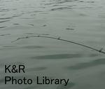 SailingZushi-Aug 080-1.jpg