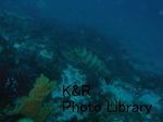 kazFuto-Feb 039-1.jpg