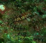kazKawanaMay 028-1.jpg