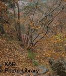 kazMyogi-Nov 196-1.jpg