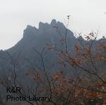 kazMyogi-Nov 223-1.jpg