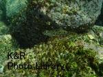 kazShishi-Aprl 029-1.jpg