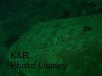 kazShishi-Aprl 057-1.jpg