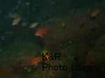 kazSisi-Mar 039-1.jpg