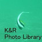 rie 048-1.jpg