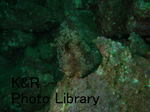 rieShishi-Aprl 044-1.jpg