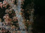 rieSisi-Mar 041-1.jpg